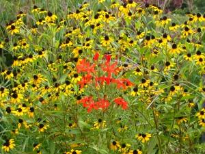 Holden Arboretum August 2007 068