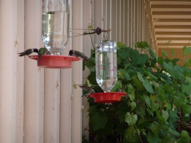 Hummingbirds at Gila Cliff Dwelling Visitor Center