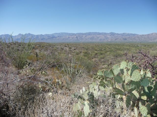 "The cactus ""forest"", 8 miles of this same scenery"