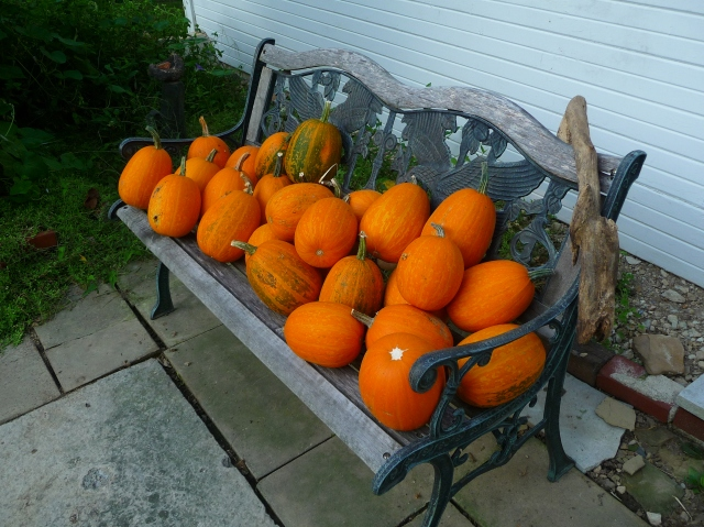 Squash from The Vine