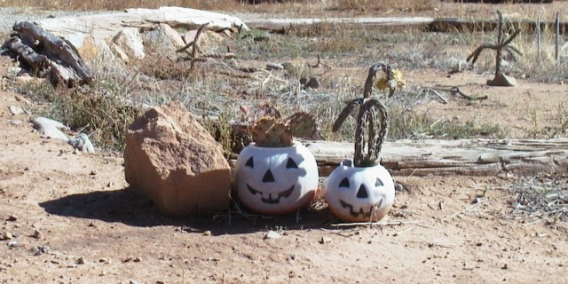 NM Pumpkins Cropped