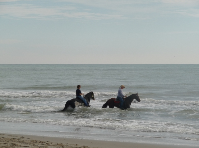 Horses and riders in the surf