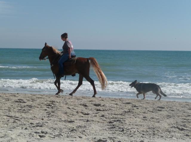 Rider, horse and dog enjoying the day