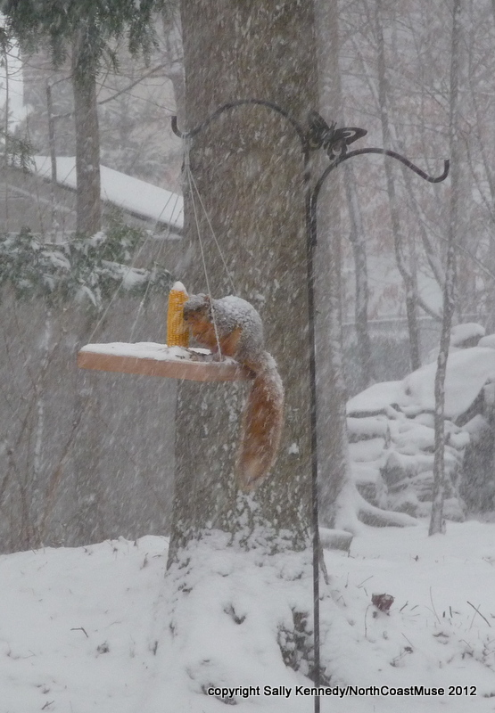 Squirrel in snow on feeder
