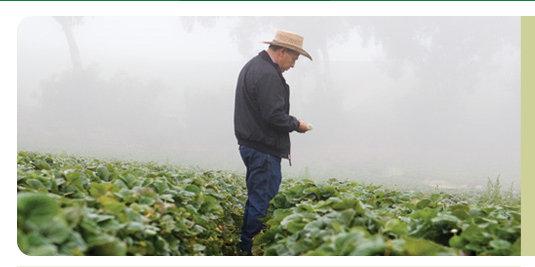 Driscoll farmer