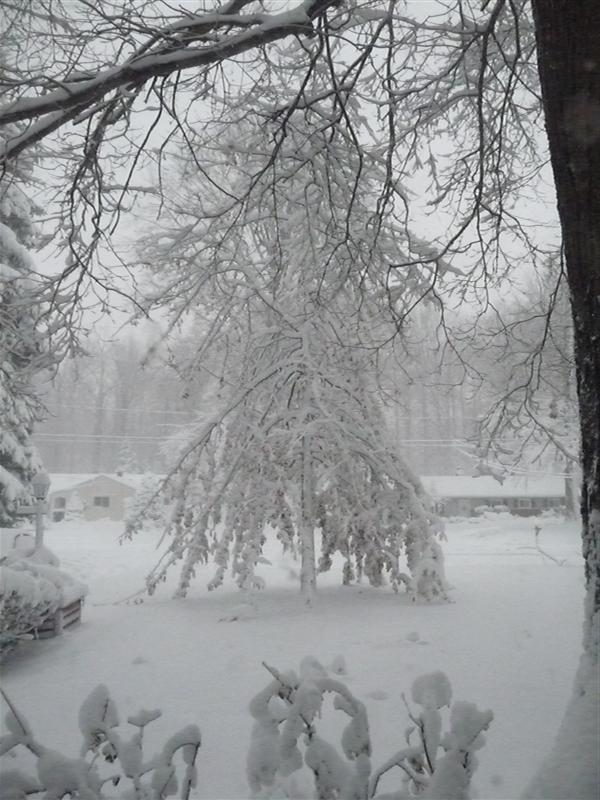 Snow on Oak