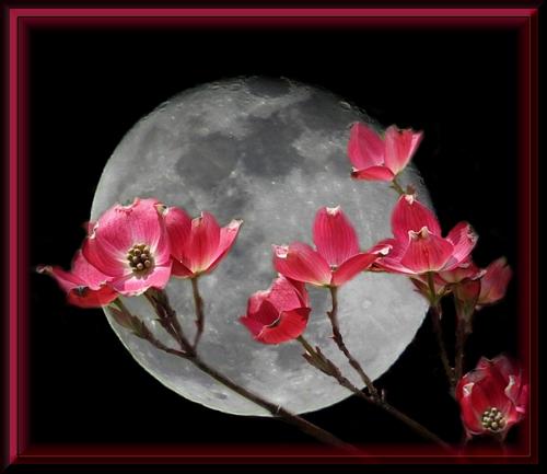 flowermoon